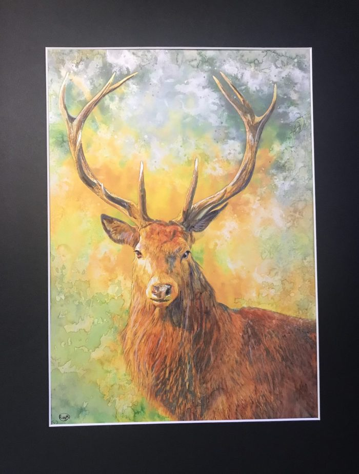 Stag_Finished&mounted